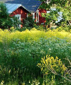This reminds me of our kesämökki in Hämeenkyrö…the glimpse of the cottage as we arrived to visit Mummi & Ukki.(Cottage, Haapasaari island, Finland)