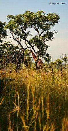 Krugerpark, South-Africa