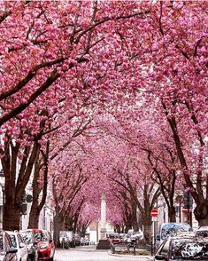 49 Ideas For Cherry Tree Art Bonn Germany Beautiful Streets, Most Beautiful, Beautiful Flowers, Beautiful Roads, Beautiful Places, Places To Travel, Places To Go, Destinations, Best Cities