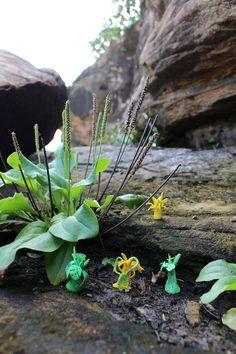 my fantasy fimo plants...
