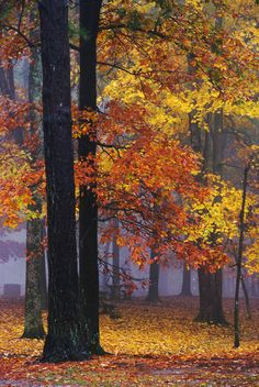 Autumn in a Foggy Park - Monte Sano State Park, Alabama
