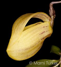 Orchids, Flora, Banana, Fruit, Plants, Image, Bananas, Plant, Fanny Pack