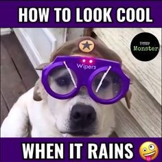 😂looks like its rain😂 🔥like and comment!🔥 👉tag someone who Cute Funny Animals, Funny Animal Pictures, Funny Cute, Funny Dog Videos, Funny Dogs, Funny Memes, Jokes, Dog Photos, Funny Photos