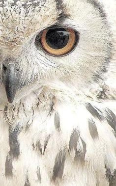 Owl by patricé