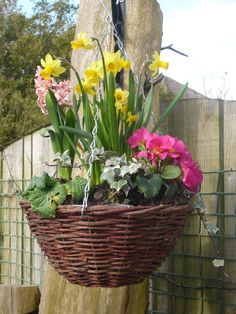 Blooming spring hanging basket battery powered led floral another one of my spring hanging baskets mightylinksfo