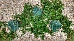 Garden, landscape, paisagismo, Suculentas.