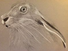Hare, charcoal and pastel, sold