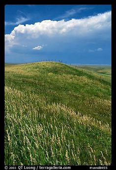 Grassy hills. North Dakota, USA