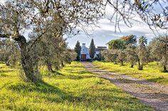 Andalucia, Aznalcazar Hacienda Dos Olivos www.dosolivosecuestre.com