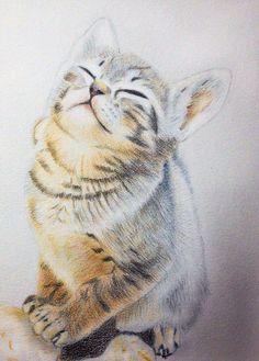 現在的心境 如同這喵咪一樣 洗滌一身的過去 迎接美好的未來 #art #illustration #color #painting #cat #animal