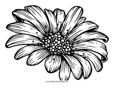 A beautiful daisy can be colored in for meditation purposes with this flower adult coloring page. Flower Coloring Pages, Colouring Pages, Coloring Books, Coloring Sheets, Fabric Painting, Painting & Drawing, Floral Drawing, Daisy Drawing, Henna Doodle