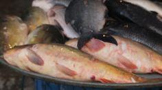 Biggest wholesale fish market at Dhaka, Baipail✔✔