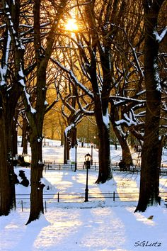 Central Park, New York City  (by Stephanie Guier Lutz)