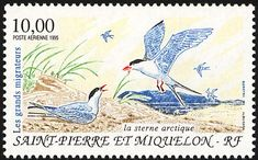 Arctic Tern stamps - mainly images - gallery format
