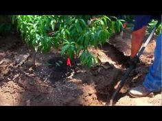 Grey Water is water from the house which is normally washed down the drain (such as laundry water), but is actually good for trees. This video is part of a s. Grey Water System, Water Systems, Laundry, Trees, Explore, Tv, Videos, Plants, House