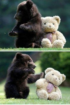 cute bear cub playing with teddy bear