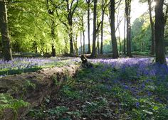 "A little path behind my house appropriately named ""Bluebell Pass"". Oxted England. [OC] [3866 x 2770]   landscape Nature Photos"