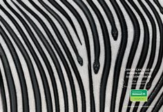 Central Nacional Unimed: Zebra