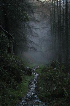 Rostrevor Forest, Ireland | Darren Giddins Definitely going to Ireland one day!!