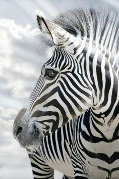 Zebra...only if their parents abandoned him. And if they would be happy