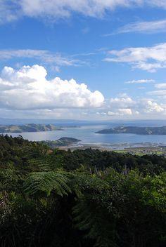 Coromandel, North island, New Zealand