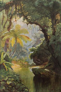 Max Zaeper-Brasilianischer Wald - Save The Rainforest - Fantasy Landscape, Fantasy Art, Jungle Art, Jungle Drawing, Jungle Gardens, Painting Prints, Art Prints, Tropical Art, Art Mural