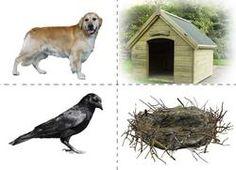 Žival in njeno prebivališče Animal Activities For Kids, Science For Kids, Science And Nature, Forest Animals, Zoo Animals, Animals For Kids, Animal Coverings, Le Zoo, Animal Habitats