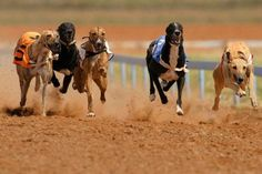 Dog Racing, Burgers & Drinks for 2