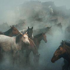 lost horses by Hüseyin Taşkın