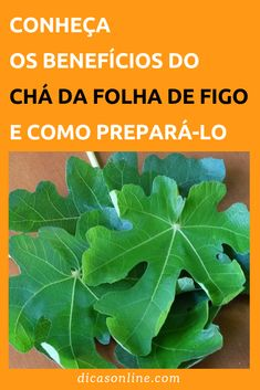 Chá de Folha de Figo - Benefícios e Como Fazer Homemade Caramel Sauce, Hot Cocoa Mixes, Glass Dishes, Medicinal Herbs, Keto, Diy Stuffed Animals, Aloe Vera, Natural Remedies, Plant Leaves