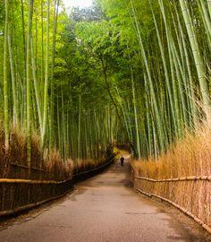 竹林の小径 (Kitasaga Bamboo Grove) in 京都市, 京都府