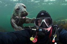 Friendly Seal - The Greatest Hilarious Animal Photobombs of All Time - Photos