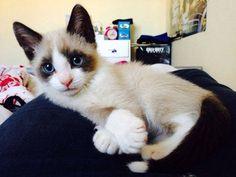 Les comportements des chats qui montrent qu'ils nous aiment !