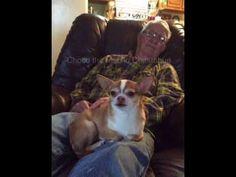68d7632b7 9 Best Choco images | Chihuahua, Chihuahua dogs, Chihuahuas