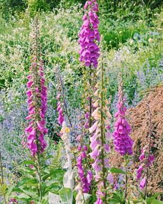 Foxgloves 🌸🌺🌸🌺🌸 (what summer dreams are made of!) Magical adventures within the stunning topiary gardens of @levenshall 🌳     www,katiecraven.co.uk    #KatieCraven #findingmagic Topiary Garden, Summer Dream, Scarf Design, Silk Scarves, Fashion Brand, Gardens, Dreams, Adventure, Plants