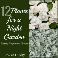 Night Garden Plants
