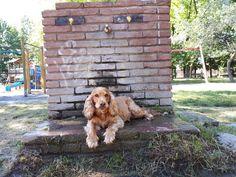 COME CAPIRE SE IL CANE E' ACCALDATO? - Sheila the Dog Dogs, Animals, Animales, Animaux, Pet Dogs, Doggies, Animal, Animais