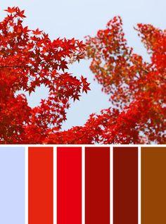 100 Color Inspiration Schemes : Blue + Red +Brown Color Palette #color #colors #palette #fall #red