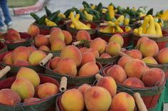 The Farmers Market at Bridgeland Continues to 'Preserve' Good Time - Bridgeland in Cypress, TX