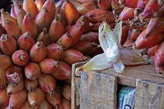 Timbiriches, aquí un racimo de frutas y uno pelado,hay organizaciones que intentan rescatarlo y yo no sabia de el.