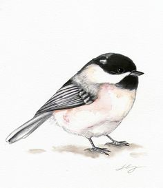 Image result for chickadee drawing