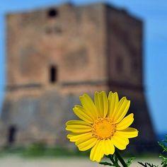Buona settimana a tutti  ve lo auguriamo con un fiore! #Cinisi #Sicilia