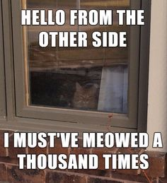 Adele meme of a cat Adele meme of a cat outside the window with her song as the caption - Gotta Check out the Cute Cats they are so funny Humor Animal, Funny Animal Quotes, Funny Animal Pictures, Cute Funny Animals, Funny Cute, Cute Cats, Animal Pics, Funny Pics, Funniest Animals