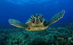 photos of sealife - Bing images