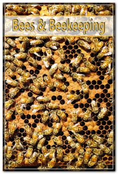 As the employee bees conduct their day-to-day regimen of preserving their hives gathering plant pollen and giving for the queen they generate some substances to have valuable functions as well as makes use of for healing. Types Of Bees, Health Food Shops, Bee Pictures, Nutrition Store, Bee Pollen, Honey Bees, Bee Keeping, Recovery, Healing