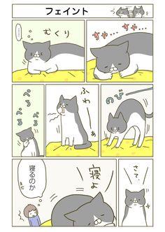 【期間限定!毎日連載】「うちの猫がまた変なことしてる。」第2話