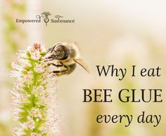 The benefits of eating bee glue (propolis) every day