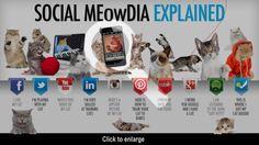 SOCIAL MEowDIA