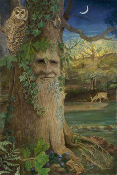 Wise Old Oak, Joyce Gibson