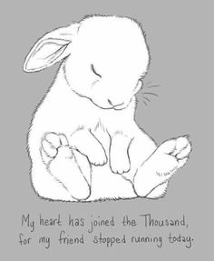 """I lost a friend yesterday.He was the guy who inspired my """"Bunny Hops Beer"""" painting, based off a silly night at a bar in Atlanta with him. One Last Bunny for Rick Animal Sketches, Animal Drawings, Cute Drawings, Rabbit Art, Pet Rabbit, Baby Bunnies, Cute Bunny, Funny Bunnies, Hase Tattoos"""